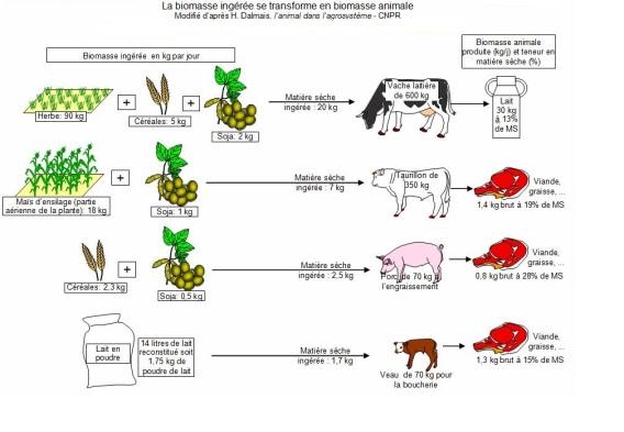 production viande